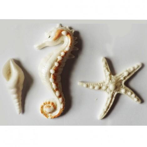 Baltos spalvos jūros kriauklė, arkliukas ir žvaigždė