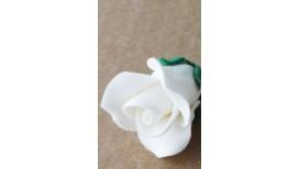 Baltos spalvos maža rožė