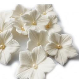 Baltos spalvos petunijos