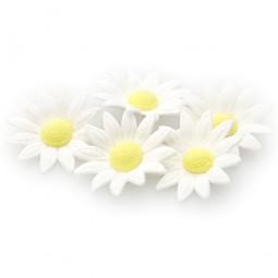Baltos spalvos ramunės