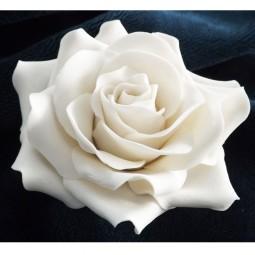 Didelė balta rožė su vielute