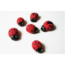 Big ladybirds