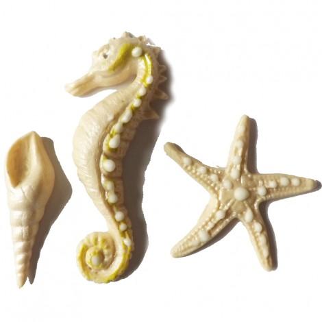 Dramblio kaulo spalvos jūros kriauklė, arkliukas ir žvaigždė