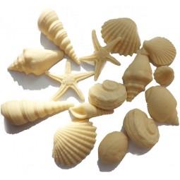 Dramblio kaulo spalvos jūros kriauklės
