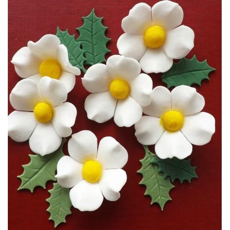Kalėdinės rožės