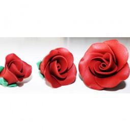 Raudonos spalvos vidutinė rožė