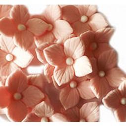 Rožinės hortenzijos