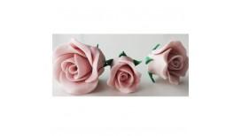 Rožinės spalvos vidutinė rožė
