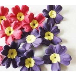 Ryškiai rožinės, tamsiai violetinės spalvos raktažolės