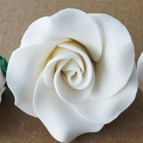 Baltos spalvos didelė rožė