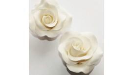 Baltos spalvos vidutinė rožė su vielute