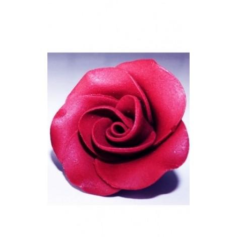 Bordo spalvos didelė rožė
