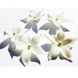 Baltos spalvos smailės